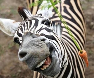 happy, zebra, and smile image