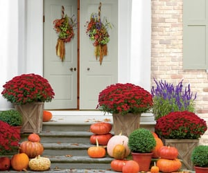 living, tumblr trick or treat, and porch image