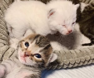 animal, cat, and baby cat image