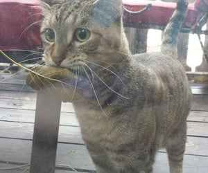 cat, funny, and leaves image
