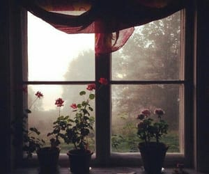 flowers, window, and beautiful image