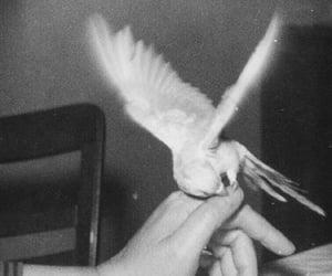 animal, pet, and bird image