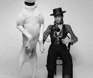 david bowie, big barking boy, and photographic art image