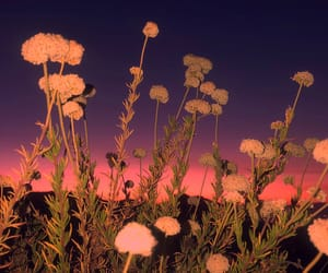 aesthetic, flowers, and sky image