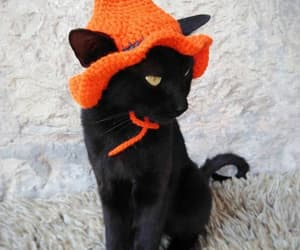 cats, funny cats, and costumes image