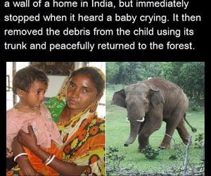 elephant, spirit animals, and elephants are love image