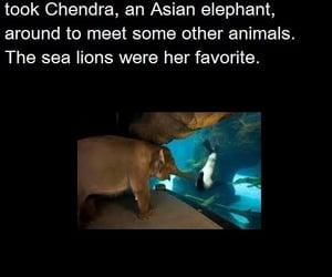 oregon zoo, chendra the elephant, and meet your mates! image