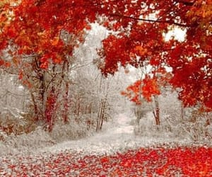 autumn, cold, and beauty image
