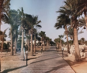 egypt, Hot, and palms image