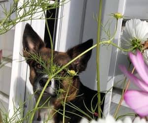 animal, dog, and flower image