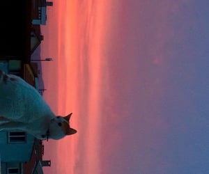 cat, pink, and sunset image