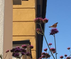 butterfly, colors, and finland image