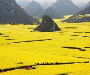 yellow, china, and nature image