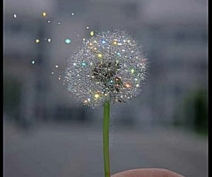 glitter, aesthetic, and dandelion image