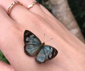 butterfly, light blue, and pretty image