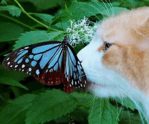 animals, cute, and butterfly image