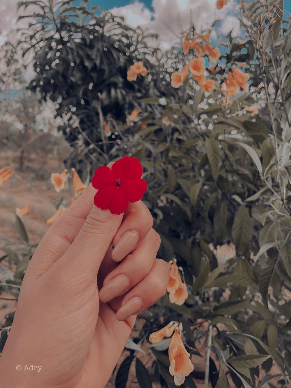 flourish and inspiration image