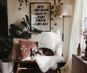 animals, cosy, and decor image