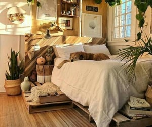 dog, plants, and room image