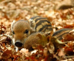 Animales, autumn, and baby image