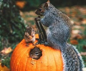 Animales, ardilla, and autumn image