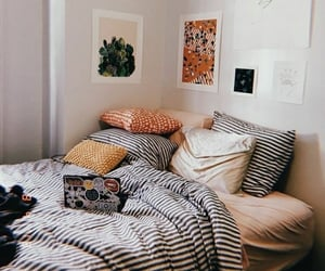 bed, cactus, and dorm image