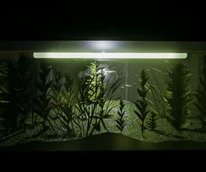 algae, dark, and flora image