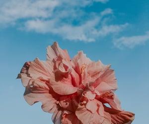 autoral, bloom, and flourish image