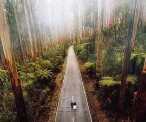 australia, bosque, and fotografía image