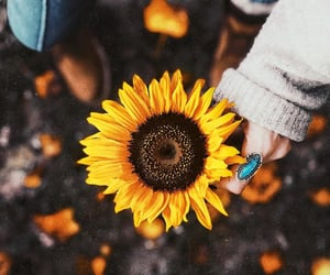 autumn, bohemian, and boho image