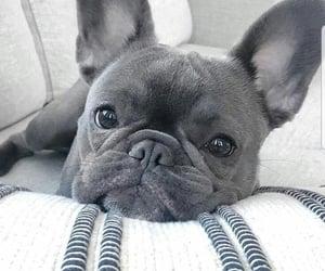 animals, doggo, and dog image