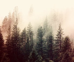 forest, wallpaper, and background image