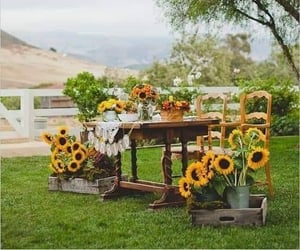 just married, wedding inspirations, and sunflowers wedding image