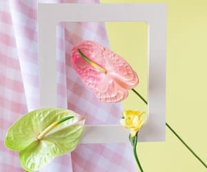 flowers, pastel, and still-life image