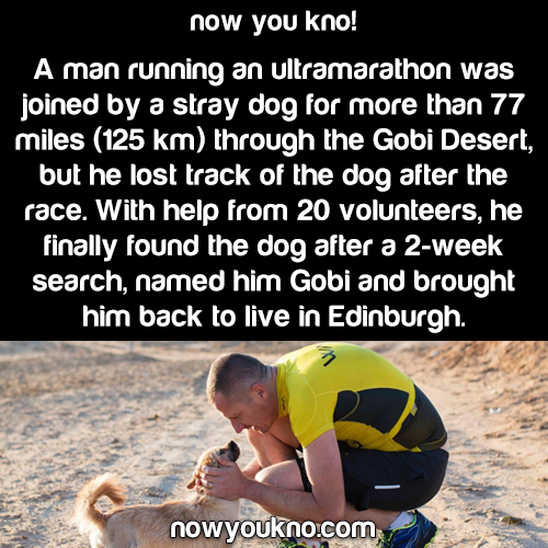 amazing, dogs, and facts image