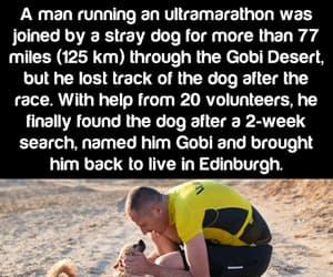amazing, facts, and dog image