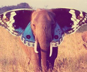 elephant, butterfly, and animal image