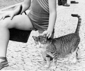 bw, cat, and rua image