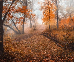 autumn, autumn colors, and autumnal image