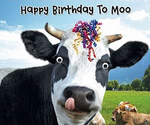 happy birthday and moo image