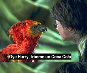 harry potter, memes, and humor image