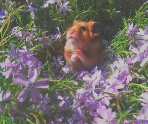 chipmunk, flowers, and lavender image