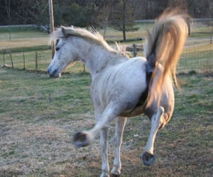 horse, kicking, and mare image