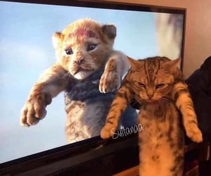 cat, kitten, and lion king image