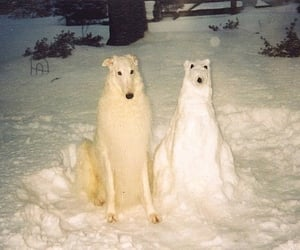 dog, snow, and funny image