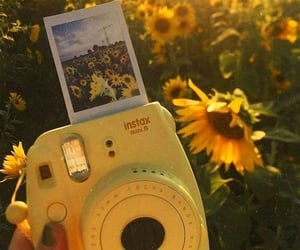 sunflower, yellow, and polaroid image