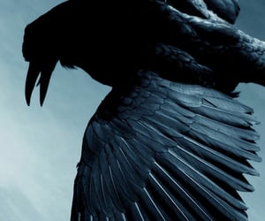 crow, ravenclaw, and raven image