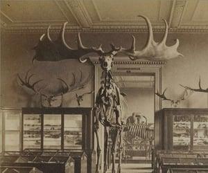 aesthetic, animal, and moose image