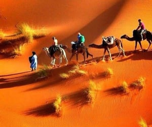 camels, dunes, and desert image
