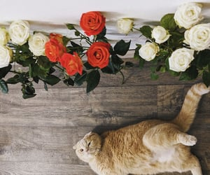 animals, pet, and white roses image